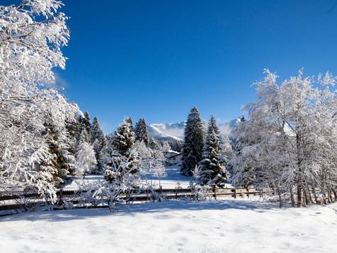 winter_10.jpg
