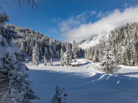 winter_21.jpg