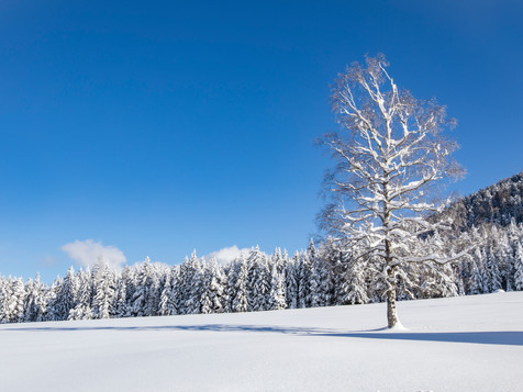 winter_18.jpg