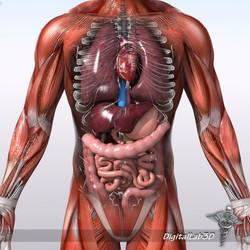220 effective shot placement 3D anatomy