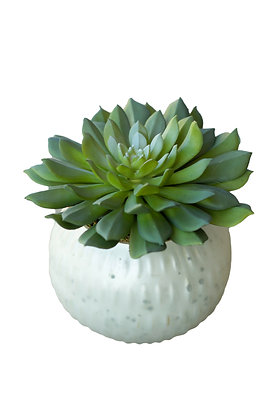 Succulent in Round Planter