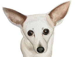 Another pet portrait. 😍 -  Don't forget