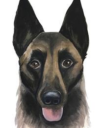 Another pet portrait. Instagram cut the