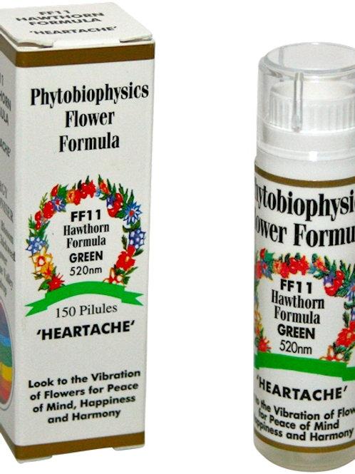 FF11 Phytobiophysics