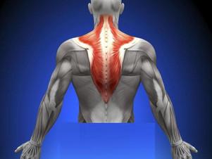 Osteopatia - Ombro: Músculo Trapézio