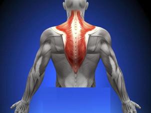Osteopatia Ombro: Músculo Trapézio