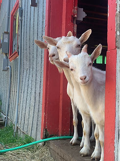 Virtual ranch Visit