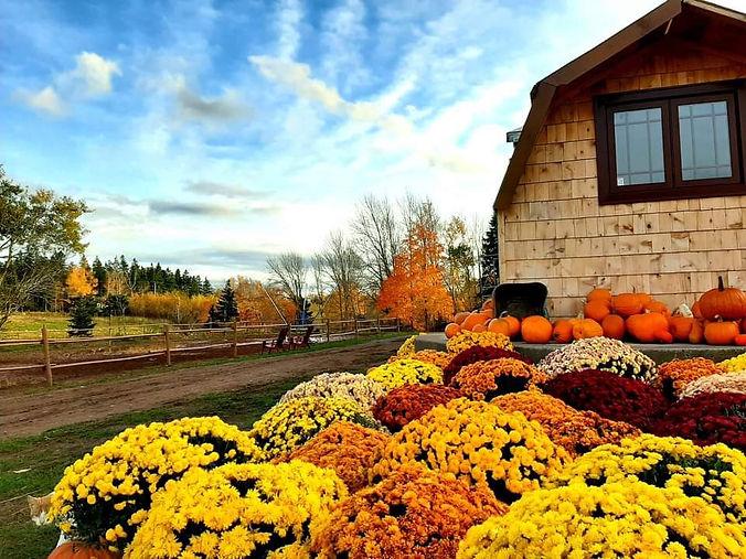Shelby Ranch Barn in Fall