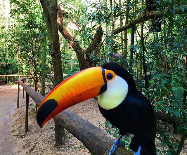 PR! E aí gostou_ Visite o Parque nacional das aves