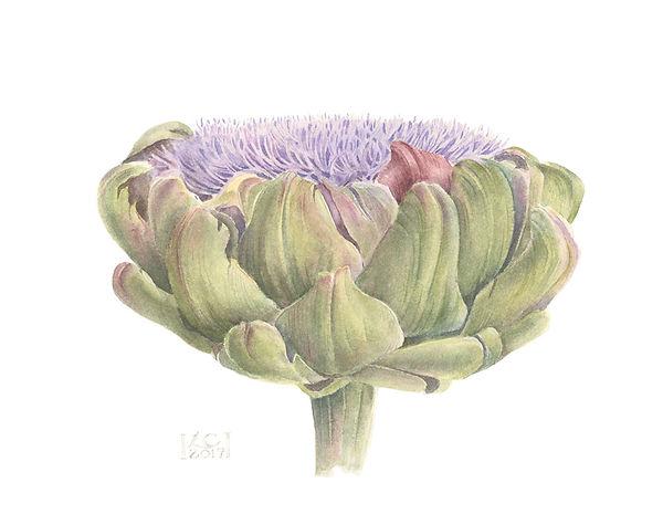 Blooming artichoke small.jpg