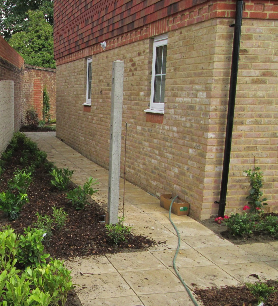 New planting Surrey
