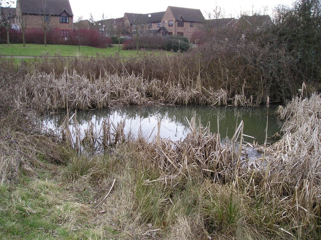 Pond at site in Milton Keynes