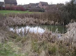 Pond at site in Milton Keynes