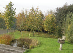 Pond in school nature area