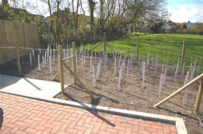 Cordon of new trees Norfolk