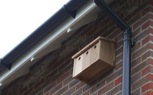 Sparrow nest box enhancing BREEAM development