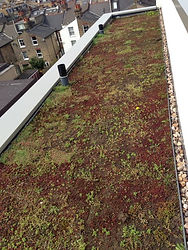 Green roof with sedums BREEAM ecological enhancement