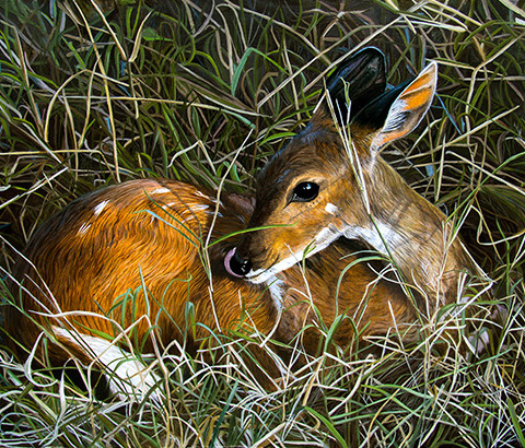 Bushbuck hideaway