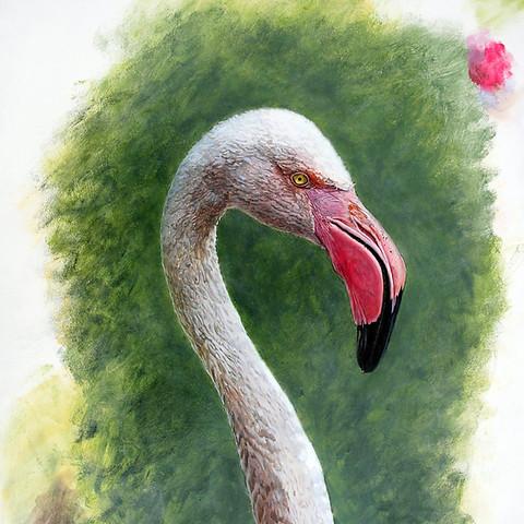 Flamingo Study