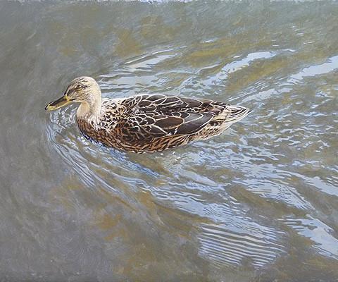 Little Duck,