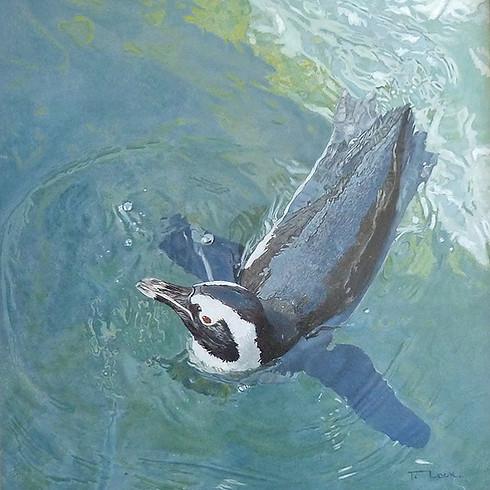 Penguin – Icy Swim