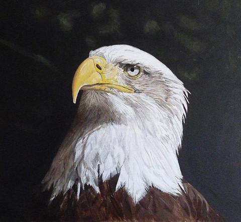 American Bald Eagle,