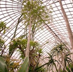 Serres-Jardin-des-plantes-Nantes-8 copie