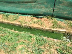 Rain Water Harvesting Conveyance System