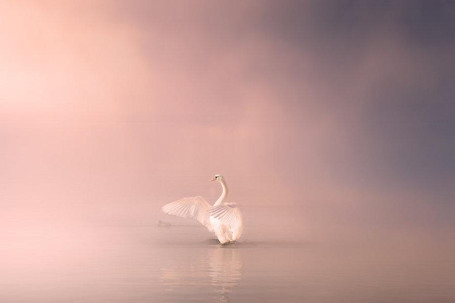 swan-4170400_1920.jpg
