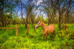 Horse along Forest Reserve Road