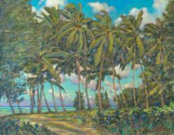 North Shore Palms
