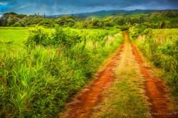 Red Dirt Road at Puu o Hoku