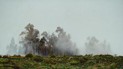 Mists Over Haleakala