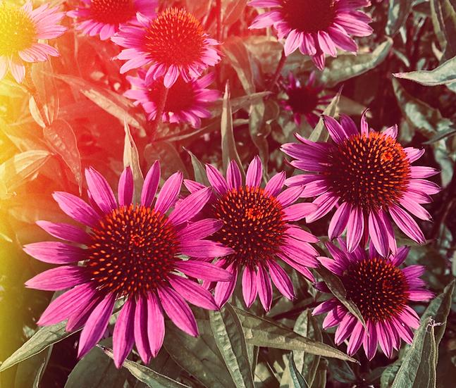 healing flower ayurveda