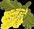 MimosaLarge.png