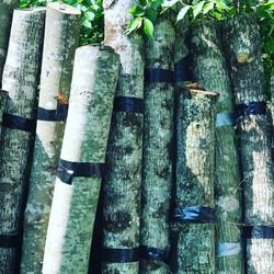 Mushroom Inoculated Logs