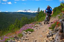 cog-wild-mountain-bike