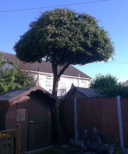 tree services in bootle liverpool