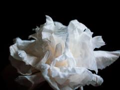 19 - Tissue