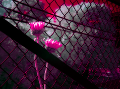 18 - Infrared Photography