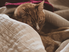 3 - Comfy Cozy Are We