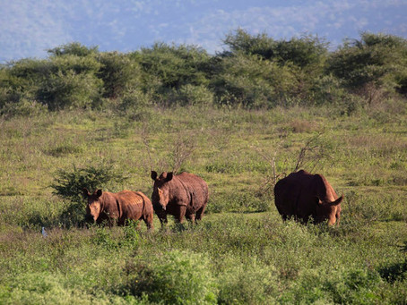 EDITORIAL: What 'relief'? Government chokes tourism