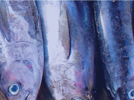 B-BBEE Commission finds something fishy with African Tuna Traders