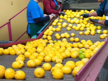 New citrus export levy sees R1bn invested into sector