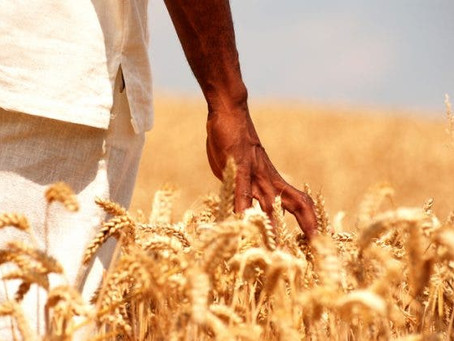 Limpopo farmer finally gets full ownership of farm after 18-year battle