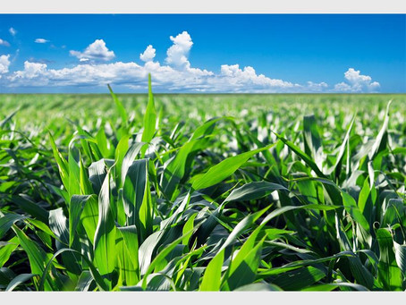 56 farms valued at R120-m to be released by metro