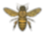 kisspng-honey-bee-drawing-bumblebee-clip