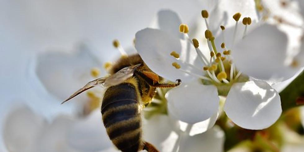 Honig - das süße Gold der Bienen