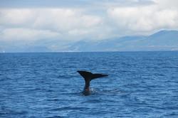 Dancing Sperm Whale