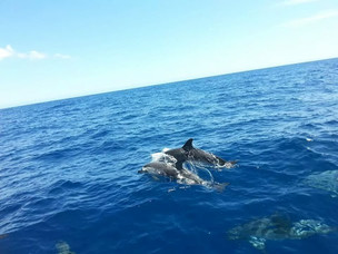 Dolphins jumping!